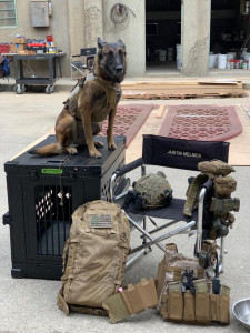 Dita, a Military Working Dog