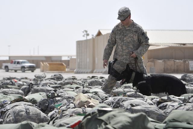 U.S. Army Sgt. Todd Neveu, a military working dog (MWD) handler, and his dog, Gino, search baggage for drugs before the bags are loaded onto a plane July 25, 2010, at Al Asad Air Base, Iraq. MWD teams randomly inspect baggage and personnel as U.S. forces transit through the base. (U.S. Air Force photo by Perry Aston/Released)