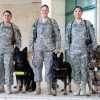 MWD Photo Shoot:  Shooting the Dark Dog