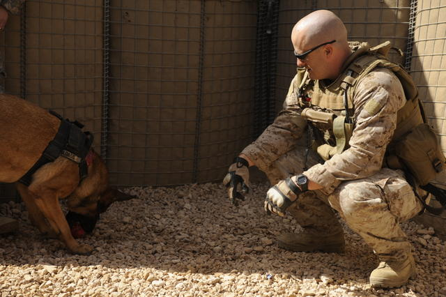 U.S. Marine Corps Staff Sgt. Chris Willingham, assigned to the U.S. Army's 2nd Special Troops Battalion, 2nd Brigade Combat Team, 4th Infantry Division, rewards his dog, Lucca