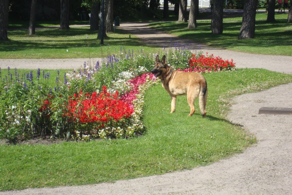 Lucca enjoying the gardens