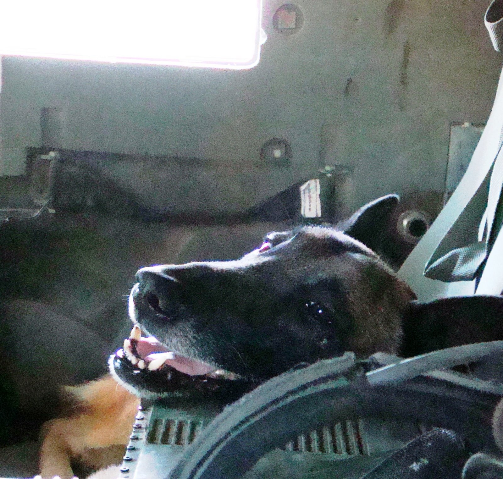 MWD Barry just chilliln' in the air conditioned vehicle