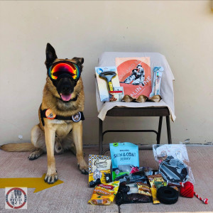 Military working dog wearing Rex Specs sits beside Q1-2019 care package contents.