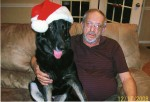 Home for the Holidays ~~ Adopting a Military Working Dog