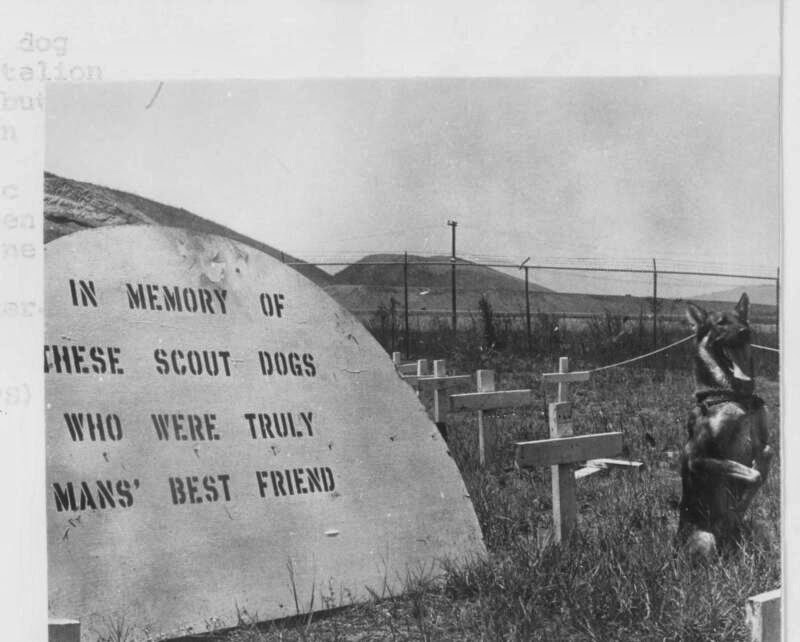 Scout Dog Cemetery Vietnam