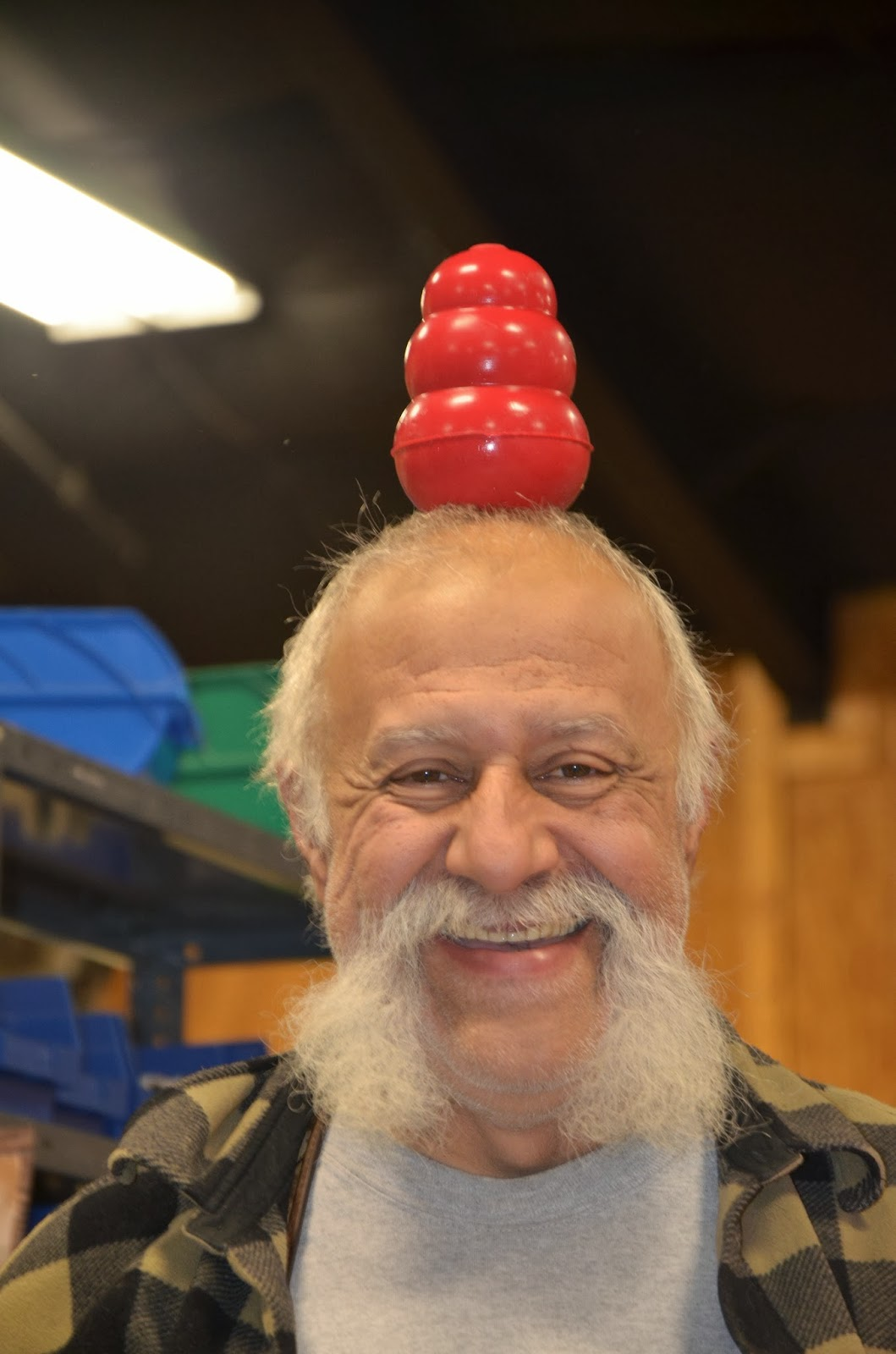 Balancing a KONG on his head