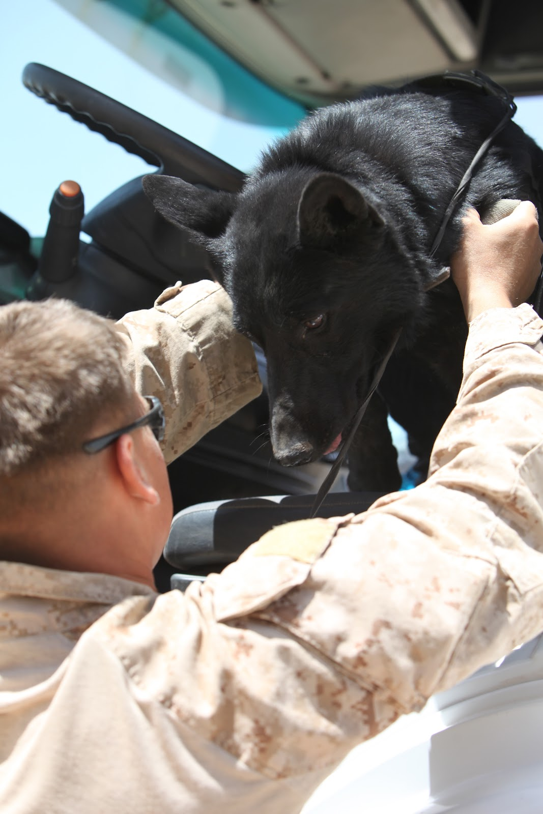 Cpl. Seth Sheppard and military canine Fenji