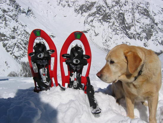 Dog and snowshoes