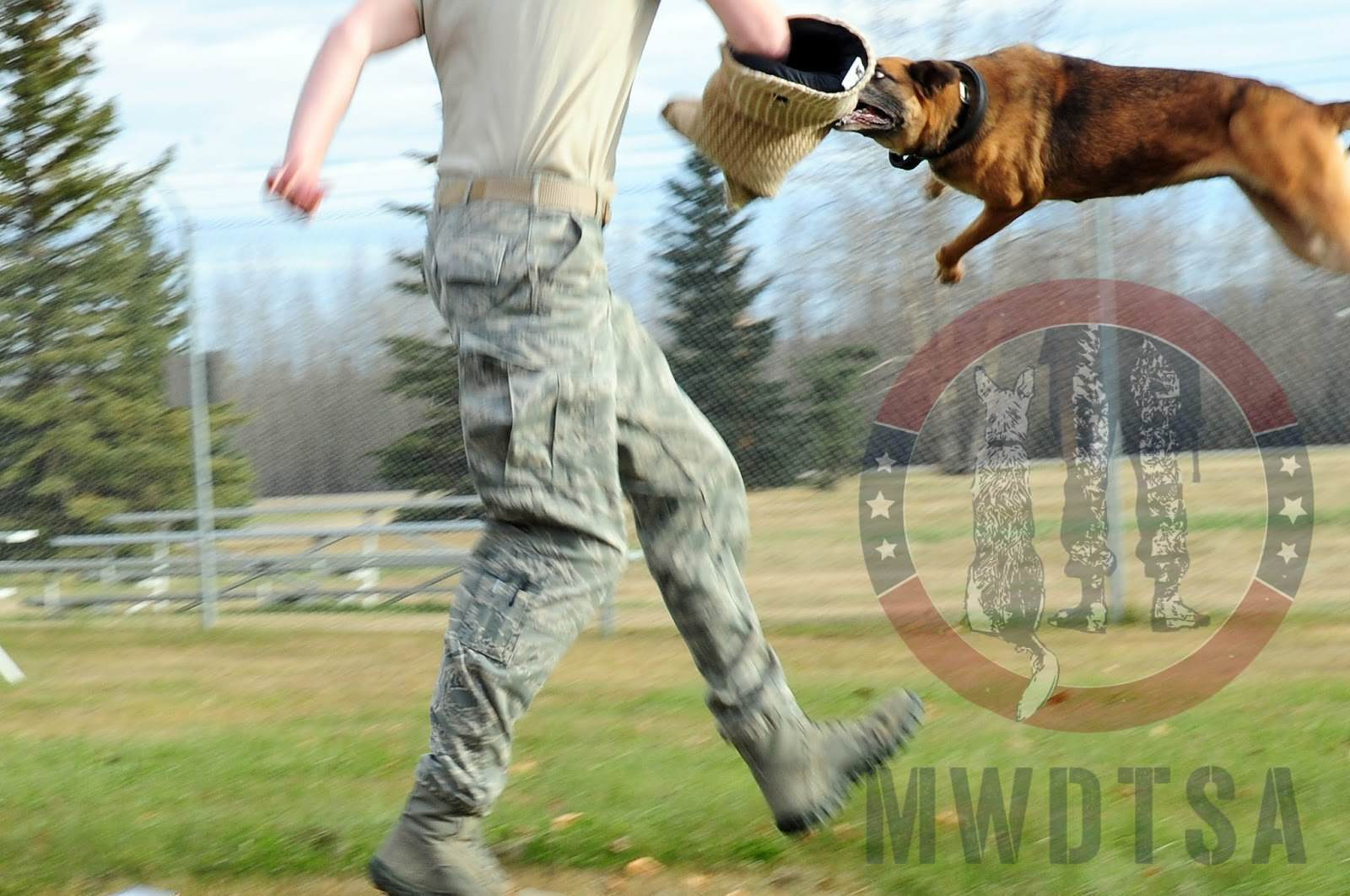 malinois-biting-training-mit