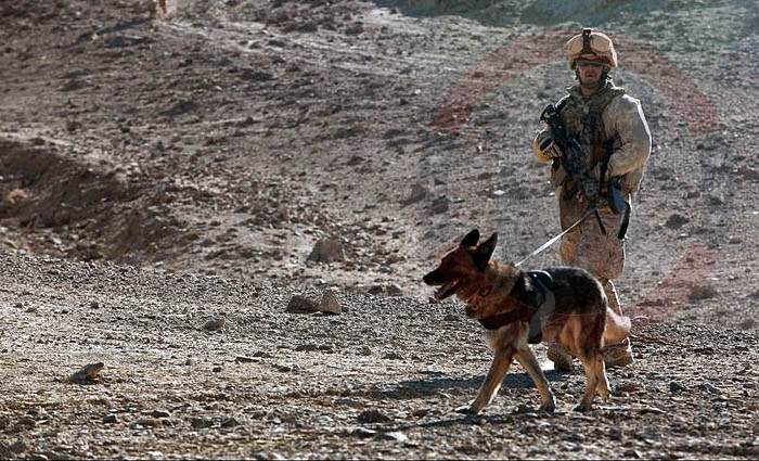 Marine, second Reconnaissance Battalion, and MWD.