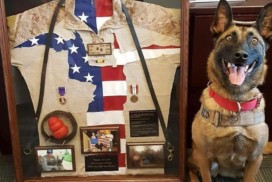 This photo shows a retired military working dog who attended a Petco Foundation Helping Heroes fundraising event.