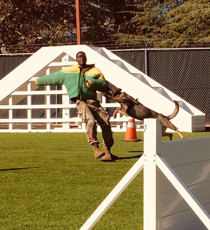 This photo shows MWD Roxie, mid-jump, jaw clamped on the arm of PFC Jackson's bite suit.