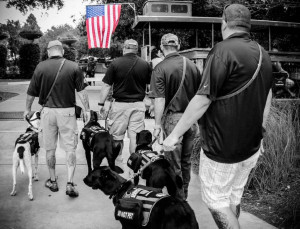 This photo shows four K9s For Warriors service dogs walking on-leash with their two-legged buddies during a training activity.