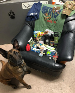 Malinois looks up at the camera, sitting in front of a chair where care package contents are displayed.