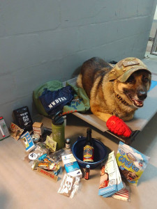 MWD is laying on a cot, wearing his handler's hat and posing with care package contents.