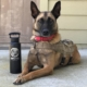 This photo shows RMWD Aura before her health deteriorated. She is modeling with a FIFTY/FIFTY water bottle, etched with MWDTSA's logo.