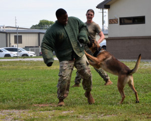 This photo shows a Fort Campbell handler in a bite suit with a dog clamped on to his sleeve. A young female trainee observes.