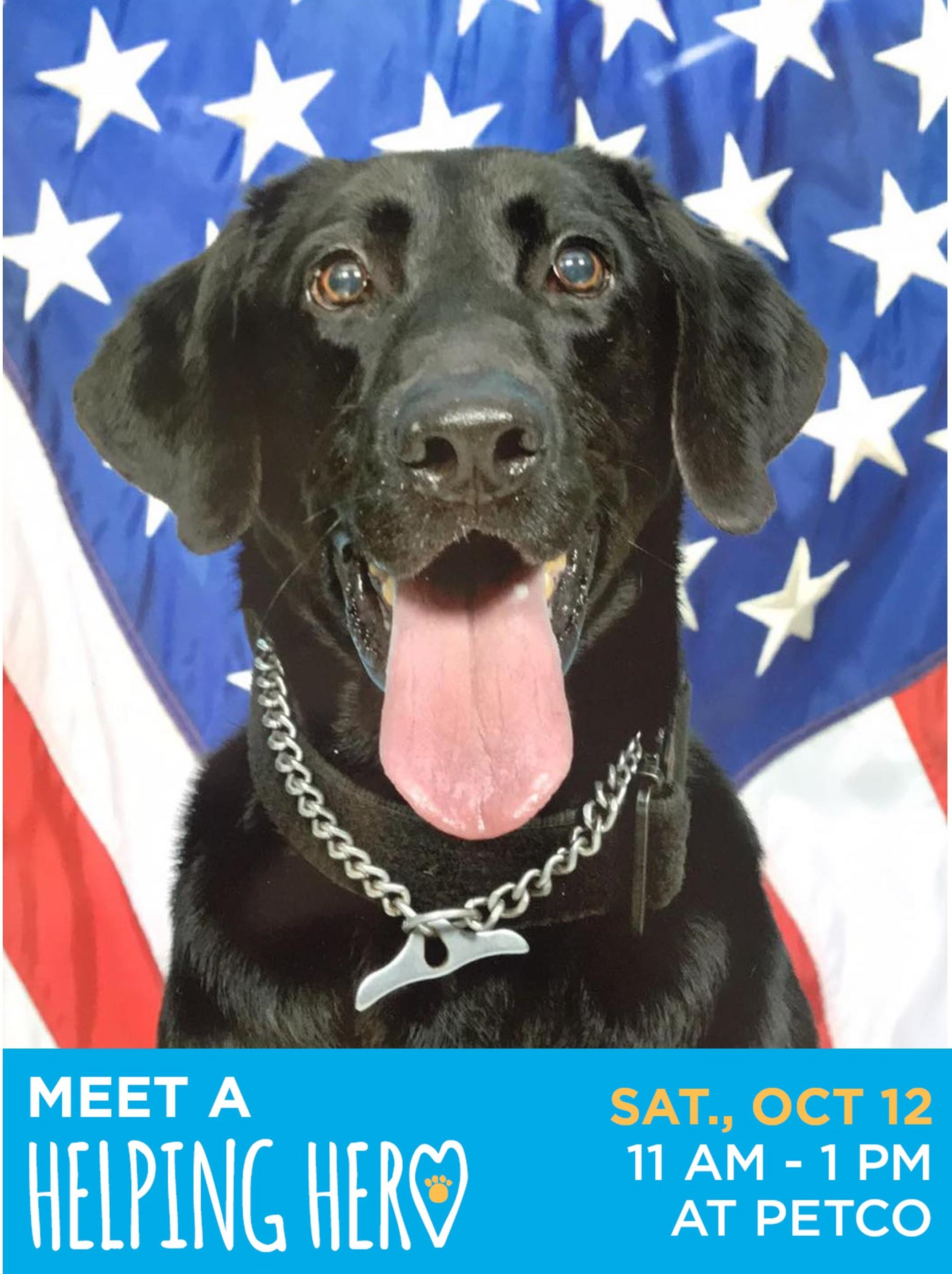 This photo shows RMWD Elmer with a U.S. flag in the background. Elmer will be one of the dogs visiting Petco on October 12 to say thank you for Petco Foundation's generous support.