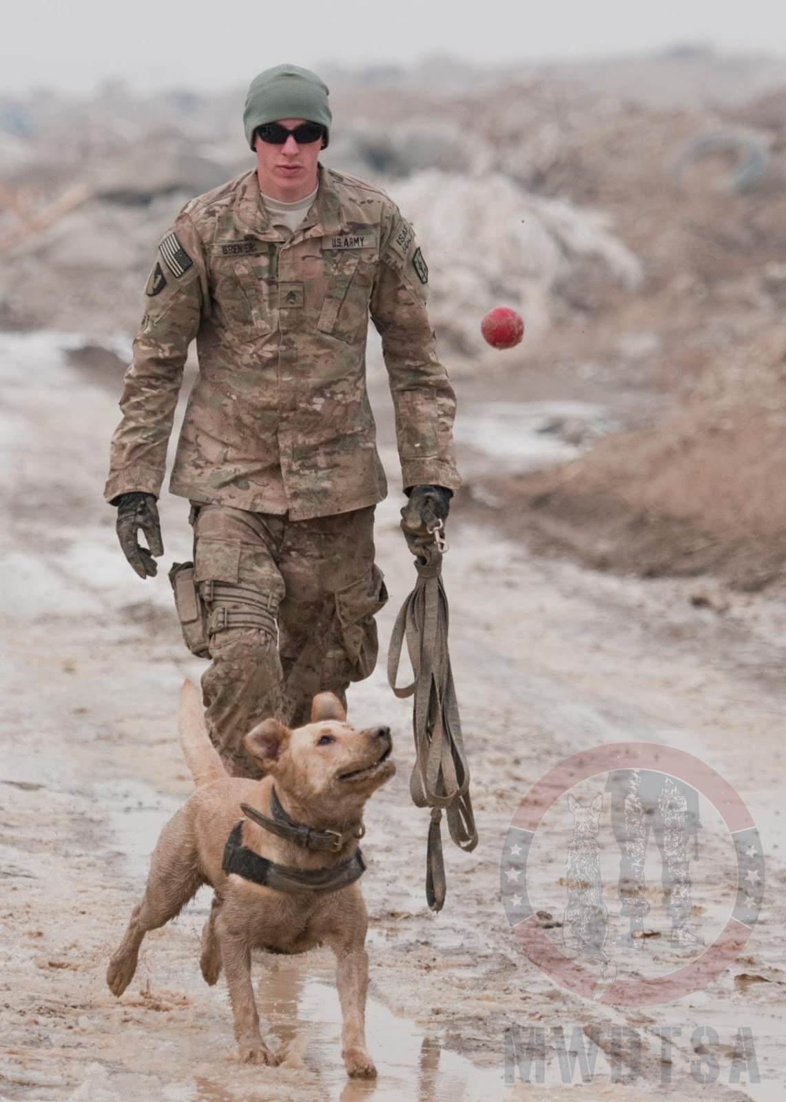 Sgt. Garret Grenier, a dog handler, gives Staff Sgt. Drake, a mine-detection dog, his favorite toy as a reward after a successful training session at Bagram Airfield, Afghanistan, Jan. 8, 2013.