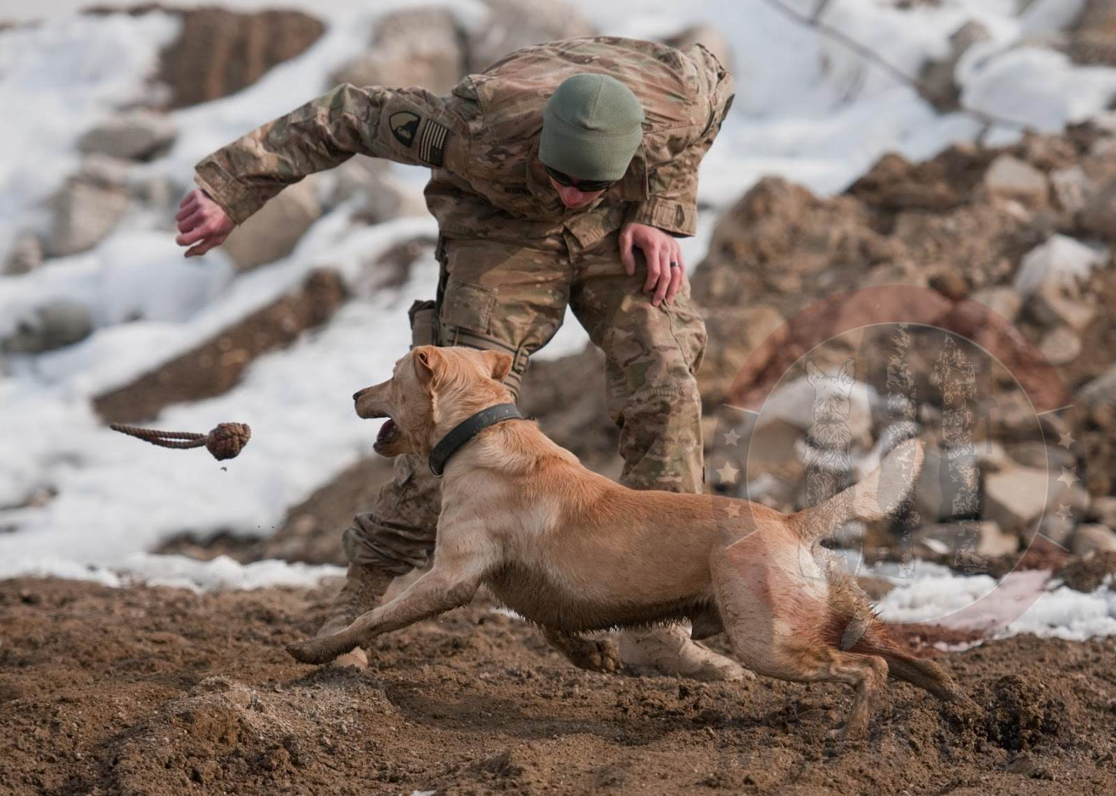 Sgt. Garrett Grenier, a dog handler, and Staff Sgt. Drake, a mine-detection dog, enjoy a game of fetch before training at Bagram Airfield, Afghanistan, Jan. 8, 2013.