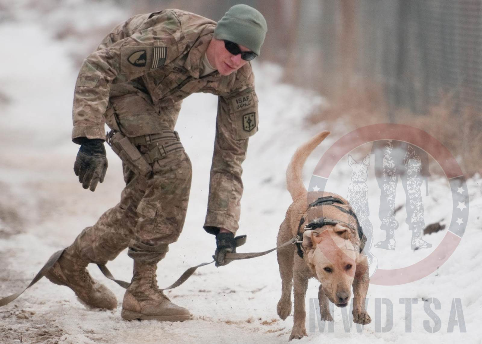 "Sgt. Garret Grenier, a dog handler, and Staff Sgt. Drake, a mine-detection dog, seek out ""mines."""