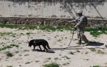 U.S. Army Spc. Adam Zettel, with the 49th Mine Dog Detection Detachment, and Allan, a mine detection dog, search a compound for unexploded ordnance