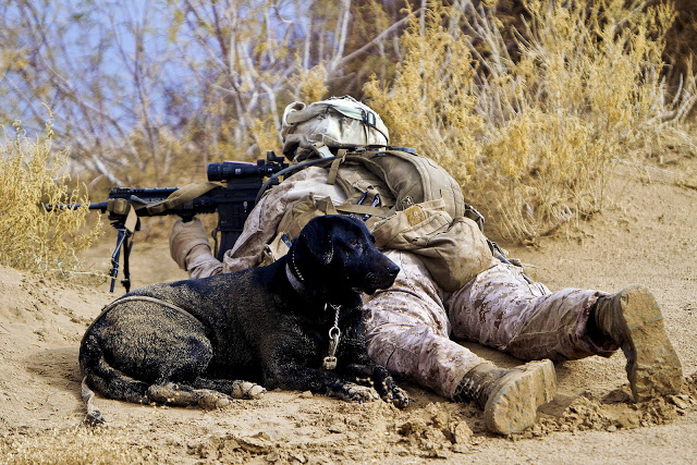 US Marine Corps Cpl. Brandon Mann with automatic scope and canine partner Ty.
